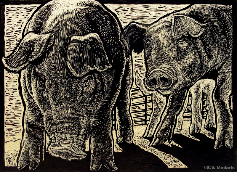 woodcut block of hogs