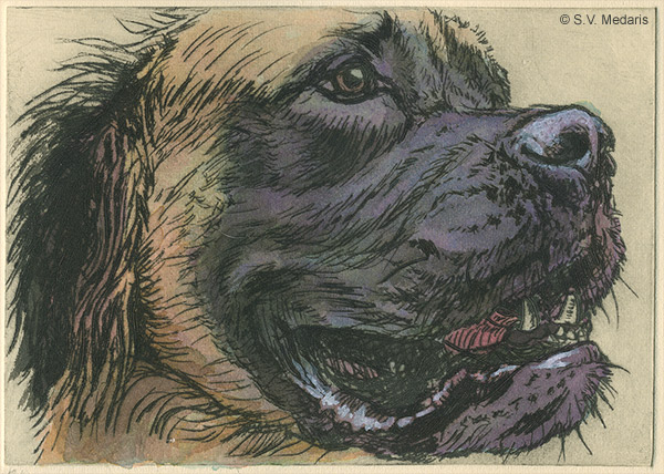intaglio of mastiff dog's head