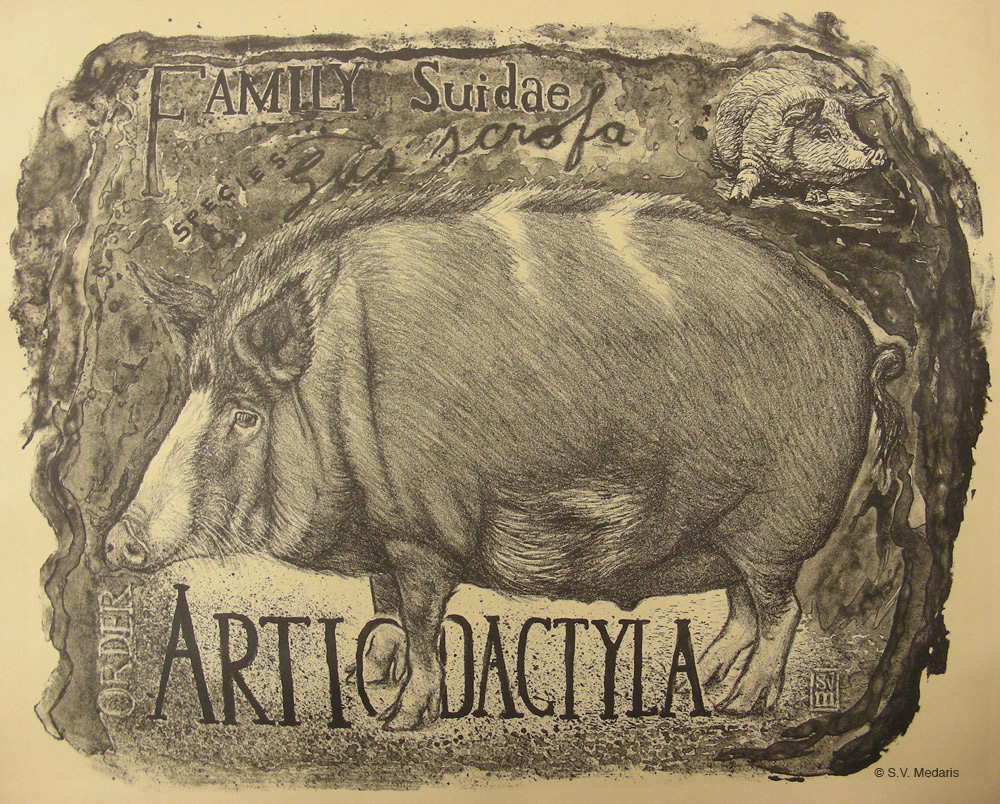 print of hog on tan paper