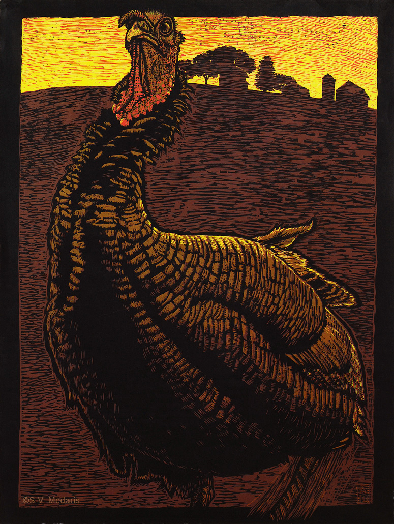 graphic, full-color woodcut of wild turkey, facing viewer