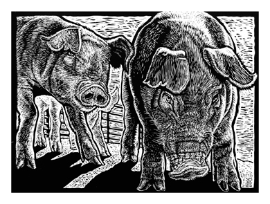 b/w woodcut by S.V. Medaris, of young pigs approaching viewer.