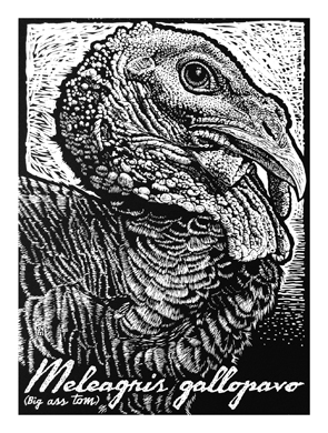 b/w woodcut of giant turkey head. Text says: 'Meleagris gallopavo'