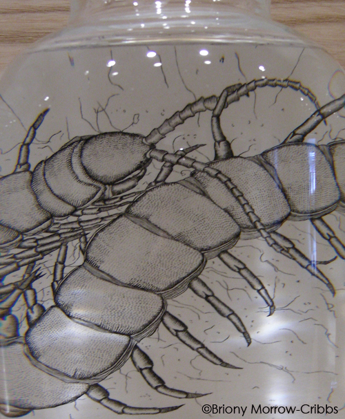 closeup of intaglio of magnified bug inside jar