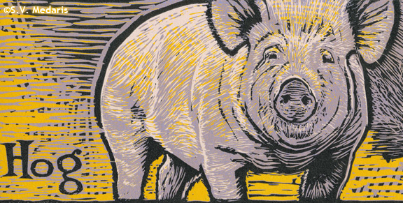 reduction relief print of hog in yellow, purple, black and pink