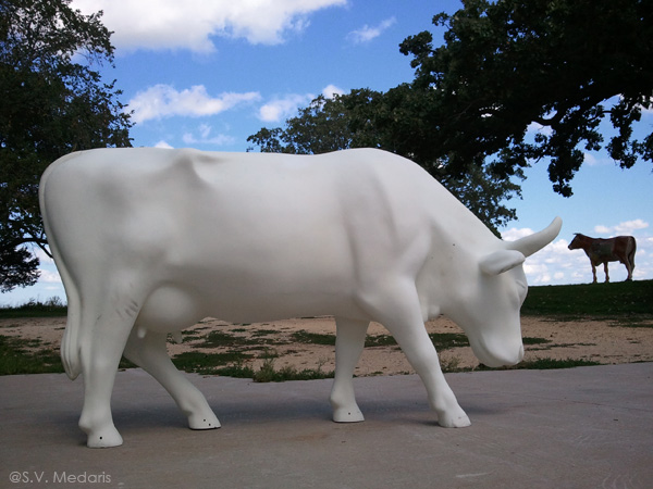 white, grazing fiber glass cow unwrapped standing on cement out in country