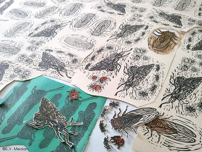 relief printed insects, some hand-colored, some not