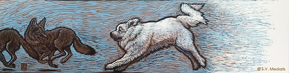 reduction linocut of great pyrenees chasing coyotes