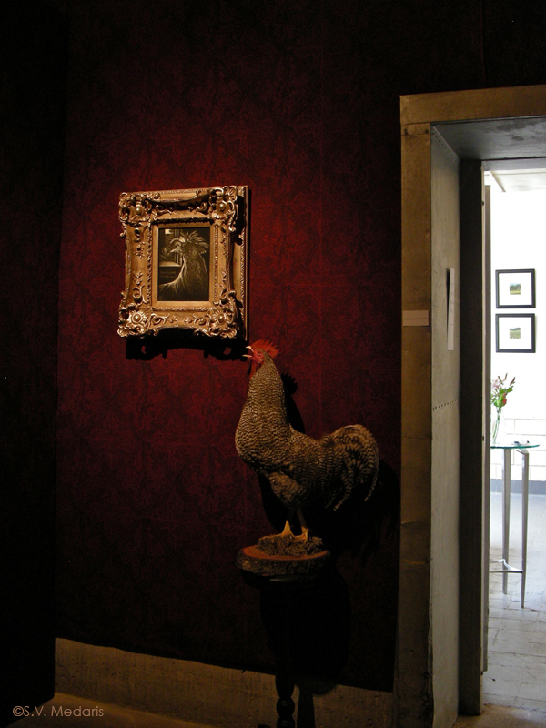 taxidermied chicken on low table next to portrait hung on densely patterned wallpapered wall