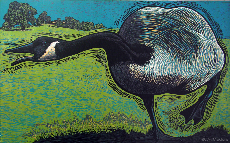 woodcut of canadian goose on green background