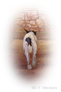 little terrier, trots away from viewer. Squirt by S.V. Medaris