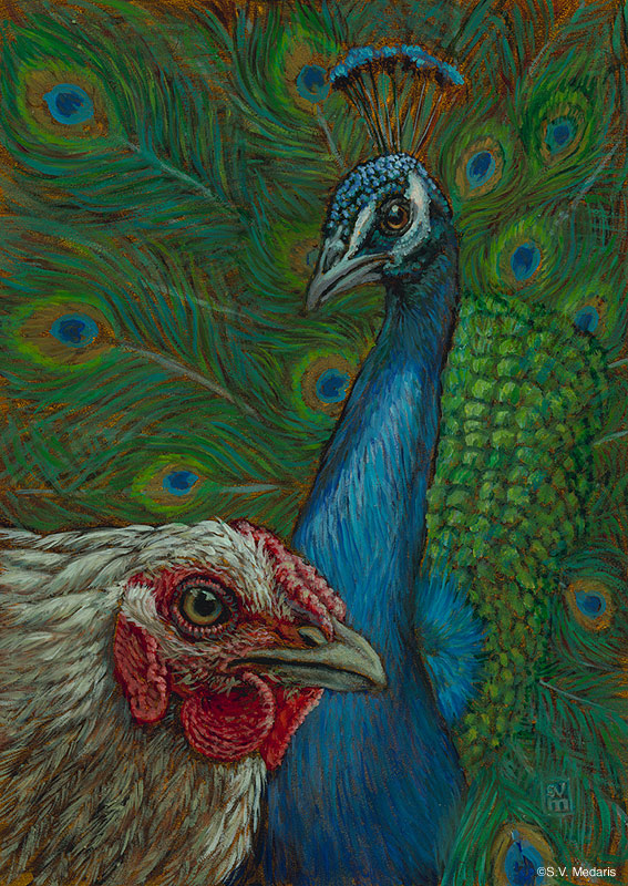 oil painting by S.V. Medaris of white chicken in front of peacock