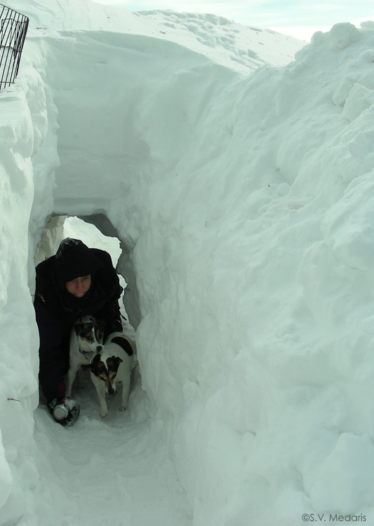 little dogs accompany human through a snow tunnel