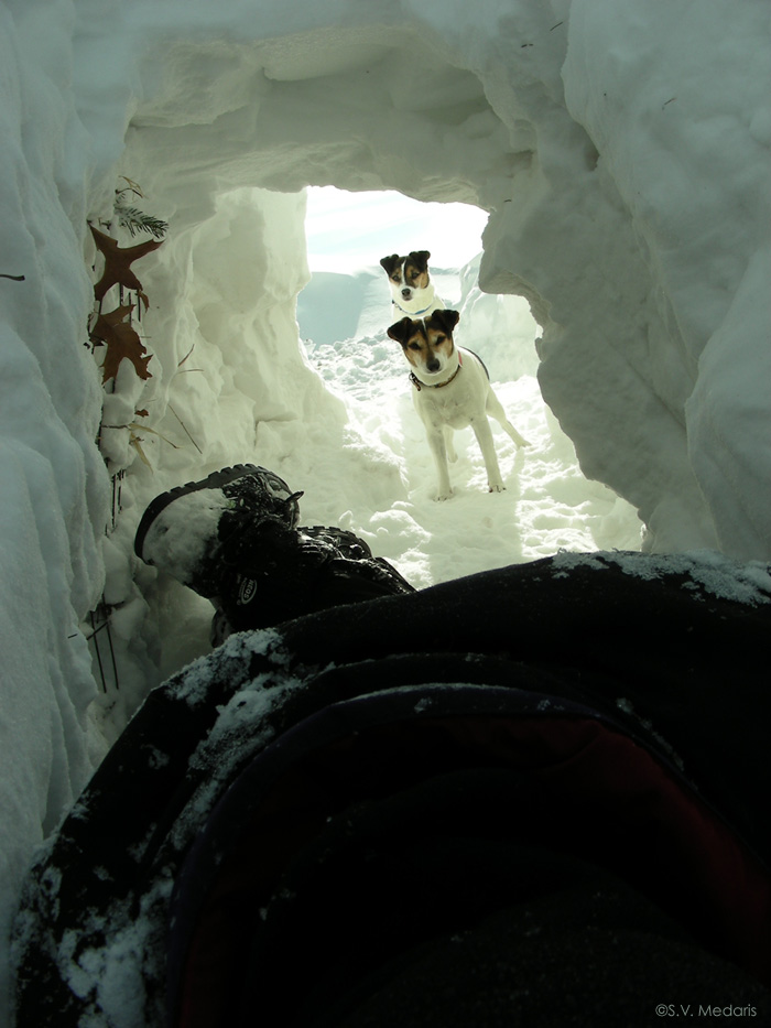 little dogs look into snow tunnel