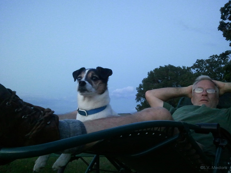 Little rat-jack terrier sits in lap and looks out for possible coyotes