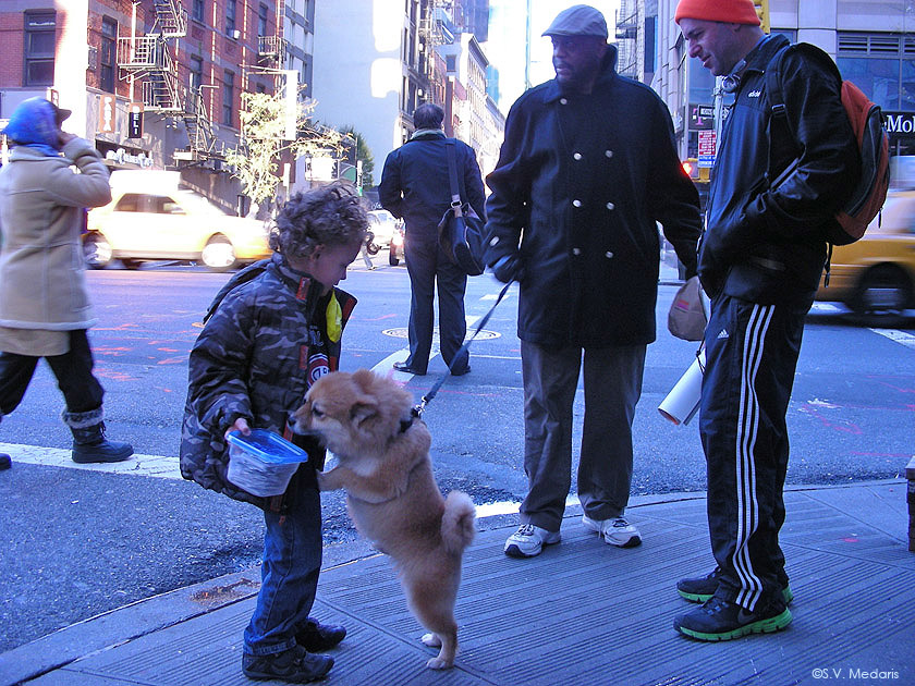 nyc street scene with little dog and little boy